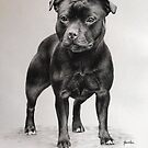 Staffordshire Bull Terrier by Peter Lawton