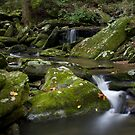 Catawba headwaters by Forrest Tainio