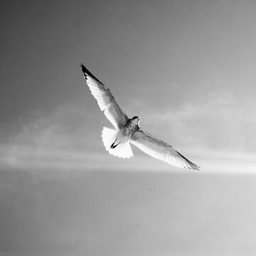 In Flight by AlexGoulet