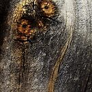 An owl in the wood by iamelmana