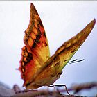 GREEN VEINED CHARAXES - (Charaxes candiope)  by Magriet Meintjes