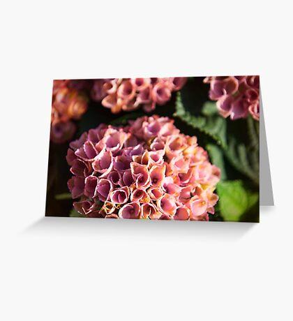 Antique Pink Hydrangea Greeting Card