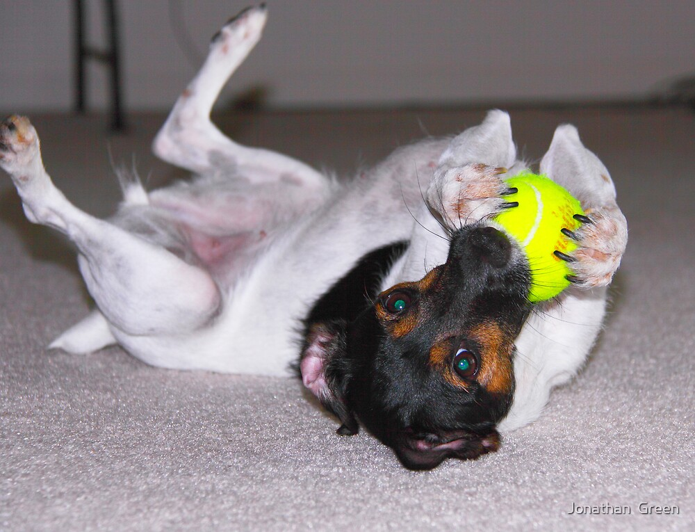 Terrier Fuzzy Tennis Ball Claws by Jonathan  Green