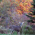 Autumn Buck by Martha Medford