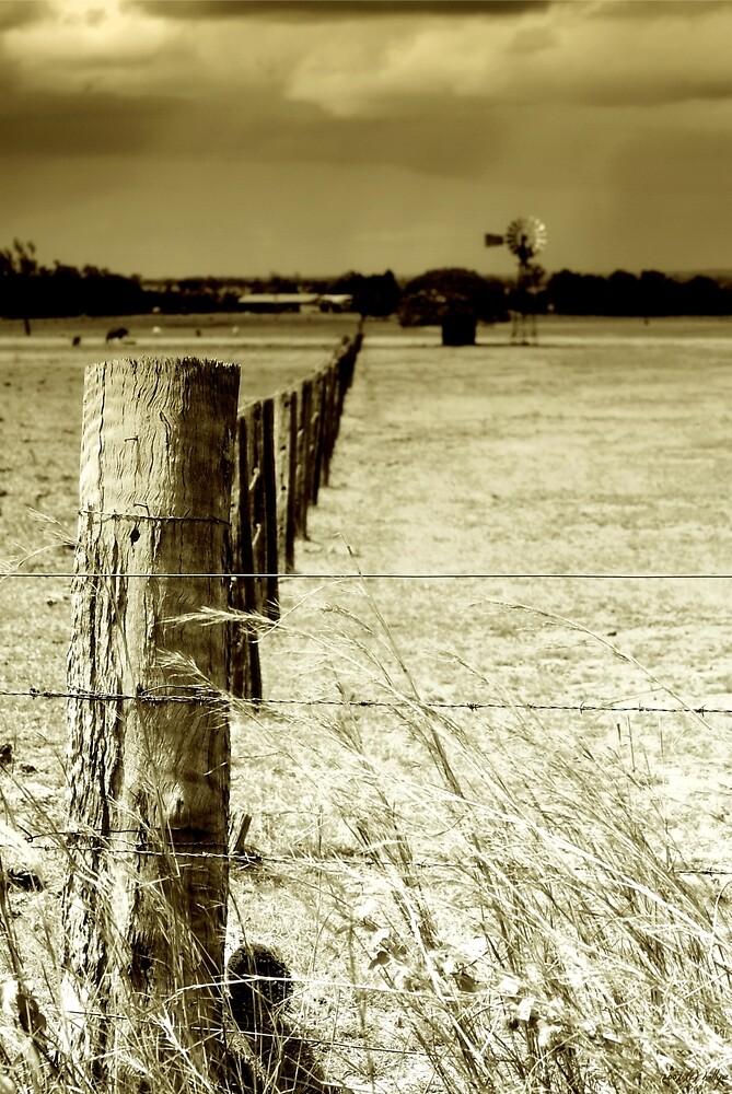 Homeward Bound by Holly Kempe