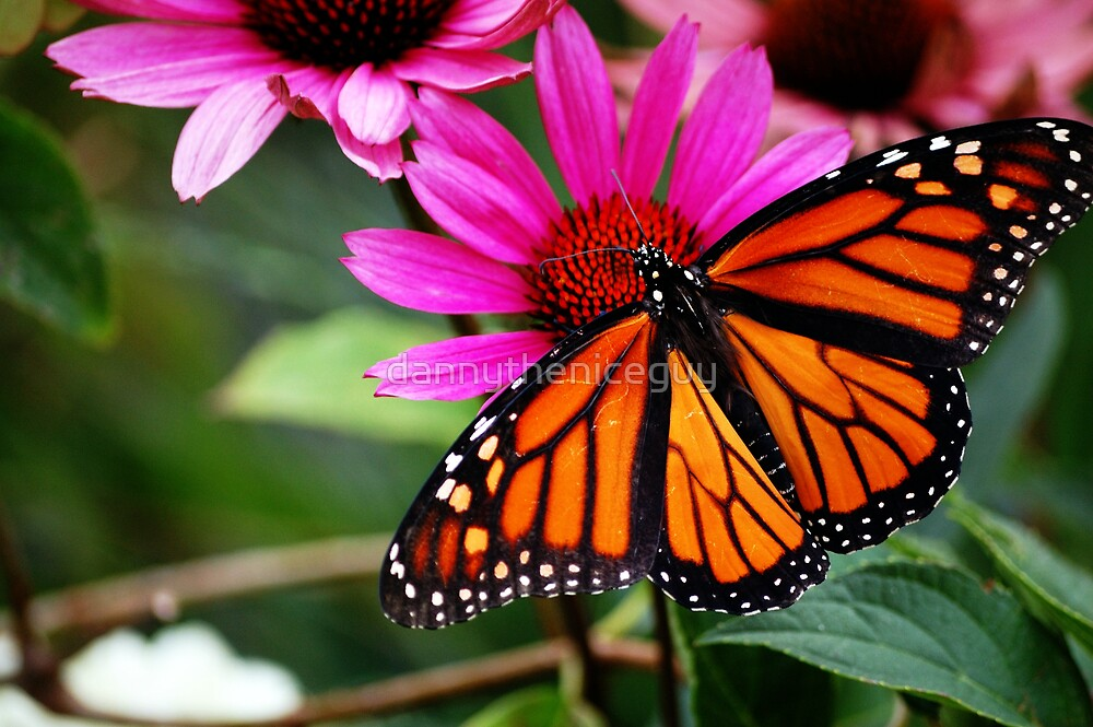 Butterfly wingspan by dannytheniceguy