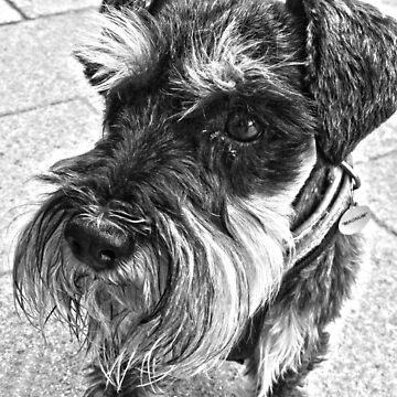 Dog in B&W by Forfarlass
