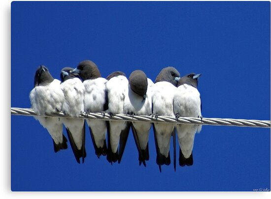Seven Swallows Sitting by Holly Kempe