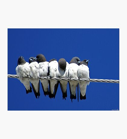 Seven Swallows Sitting Photographic Print