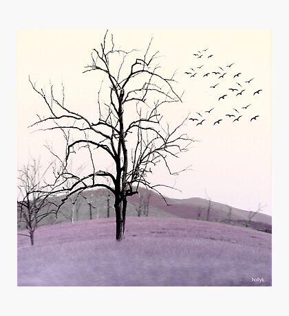 Tree Change Photographic Print