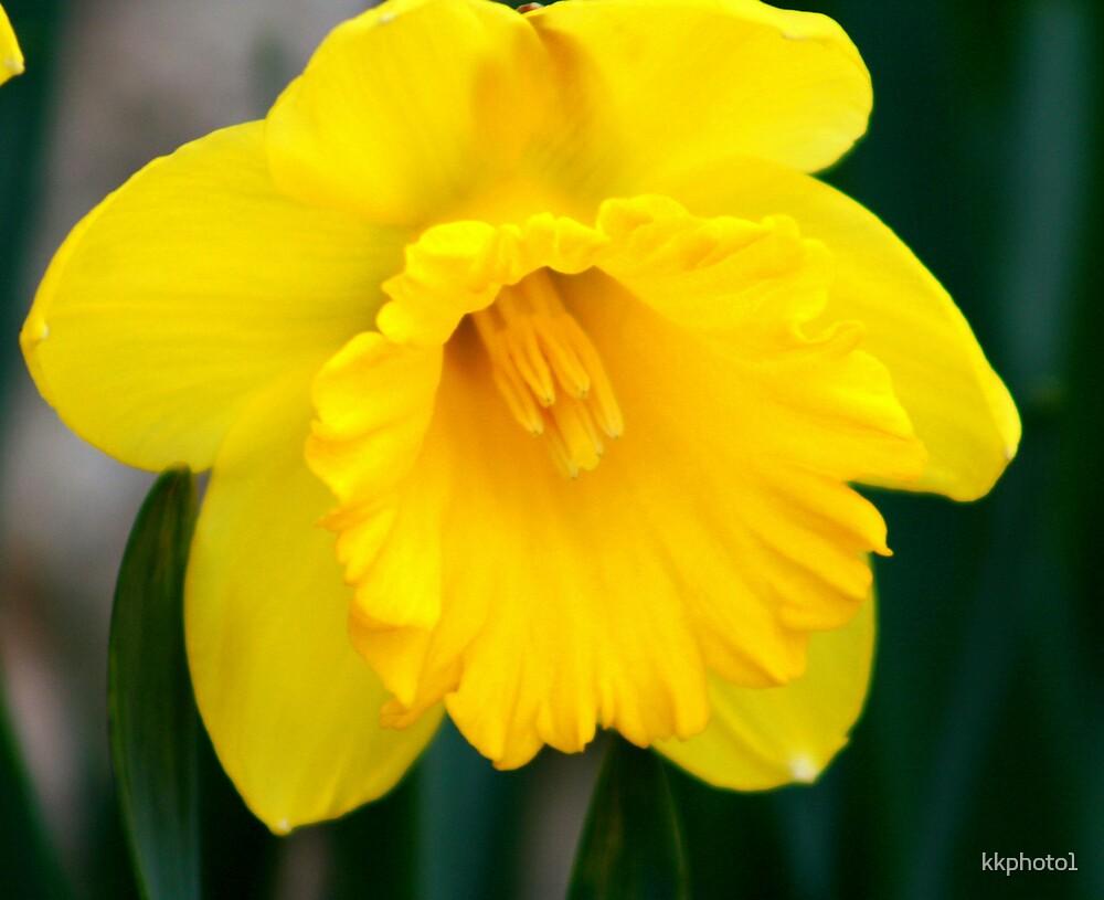 Sunshine Yellow by kkphoto1