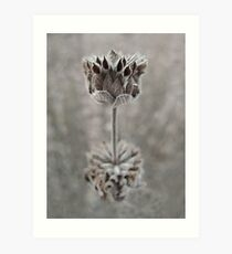 Dried Flower Art Print