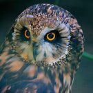 I see you by Cheryl Dunning