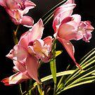 Cymbidium Orchid by Roz McQuillan