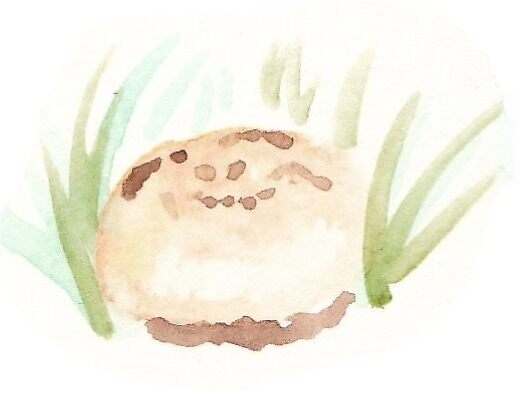 puffball by Beatrice Impton