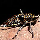 Funky Bug by wildimagenation