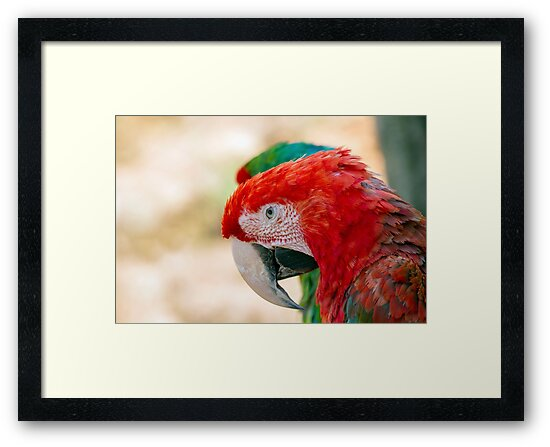 Green Winged Macaw Portrait by MarkUK97