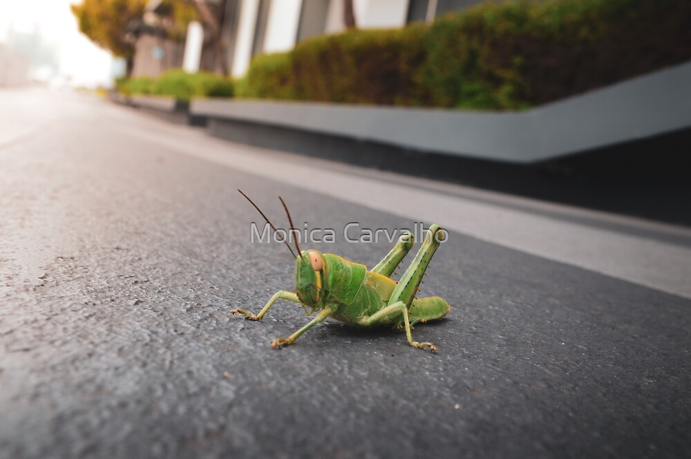 Grasshopper Says Hi by Monica Carvalho (mofart_photomontages)