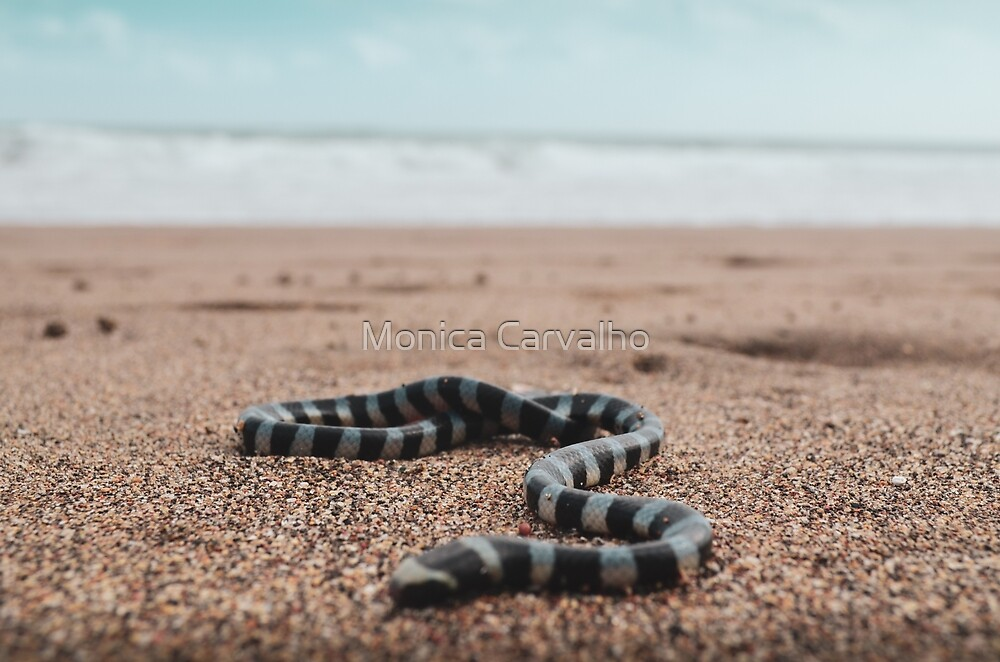 Banded Sea Snake by Monica Carvalho (mofart_photomontages)