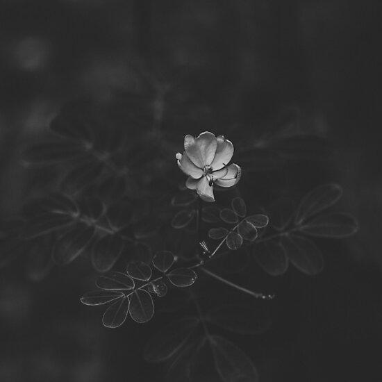 Husk. by sononek0