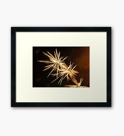 plumage display Framed Print