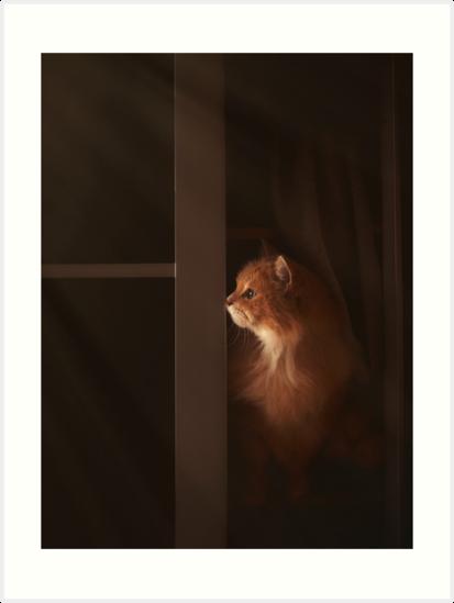 Cat curiosity by Pino Esposito