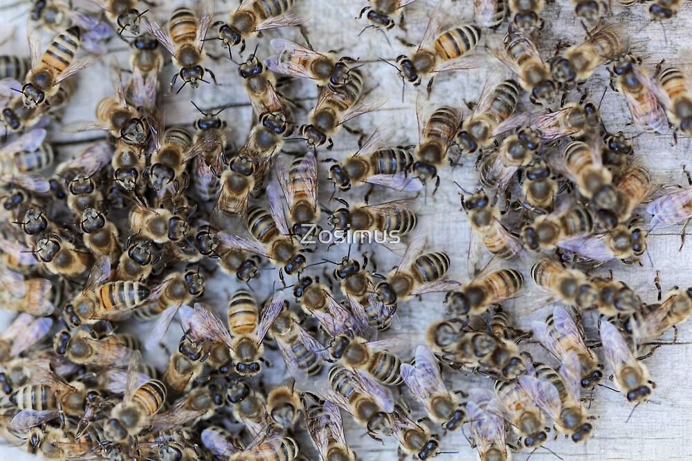 European honey bees (Apis mellifera) on a wood background by Zosimus
