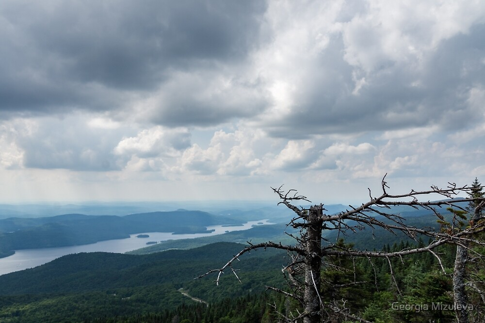 Mountain Drama - Turbulent Sky and Broken Pines by Georgia Mizuleva