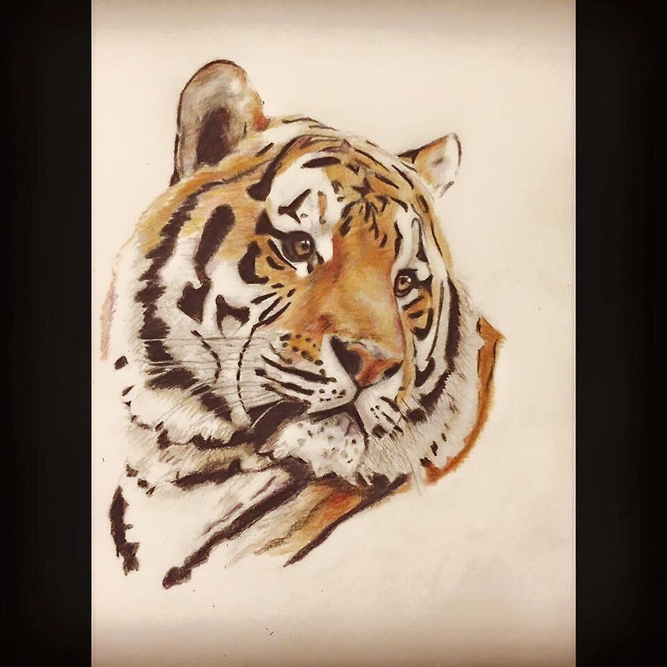 Tiger by EricaHazenArt