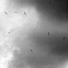 Flock of Gliders by John Dalkin