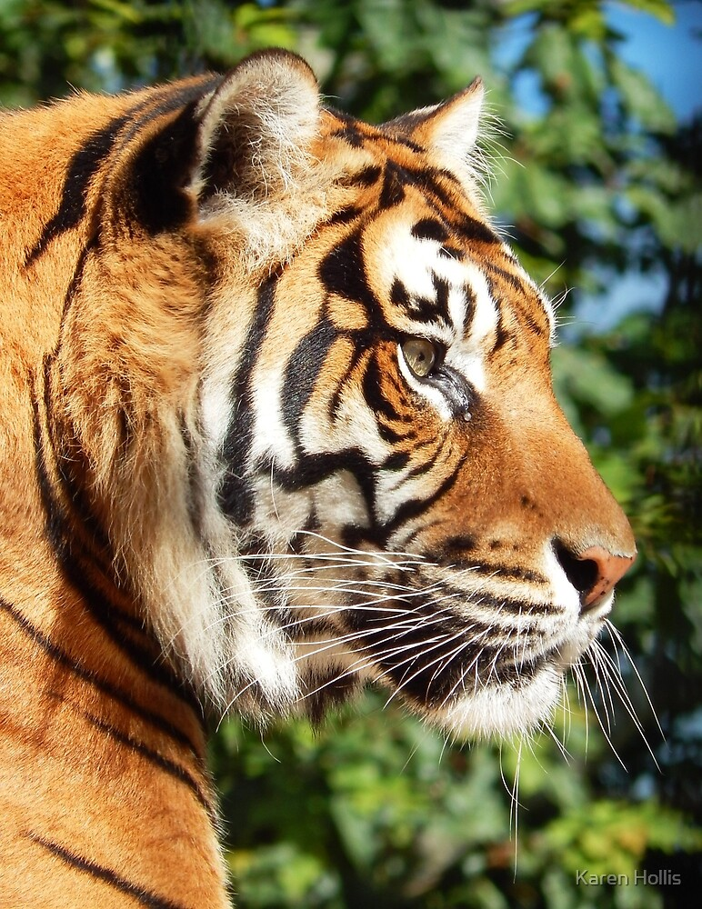 Tiger Surveying The World by Karen Louise Hollis