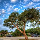 Oak Tree and Car by TJ Baccari Photography