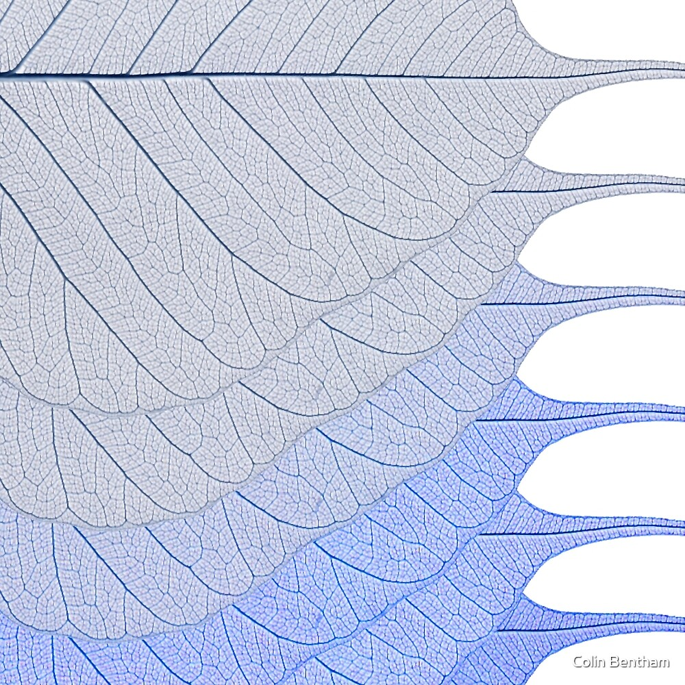 Blue Leaves by Colin Bentham