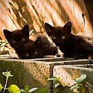 3 Little Kittens by georgiaart1974