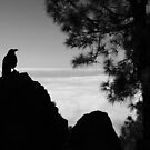 Crow in black and white | Canary Islands by LiriMor