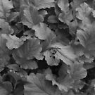 Bunch of leaves in black and white | Azores by LiriMor