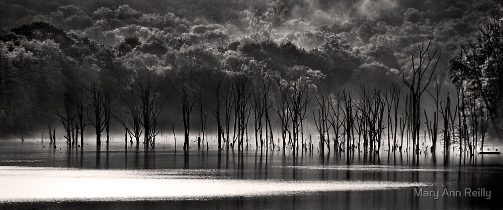 Trees at Reservoir, VI by Mary Ann Reilly