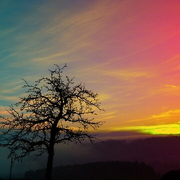 Old tree and colorful sundown panorama | landscape photography by patrickjobst