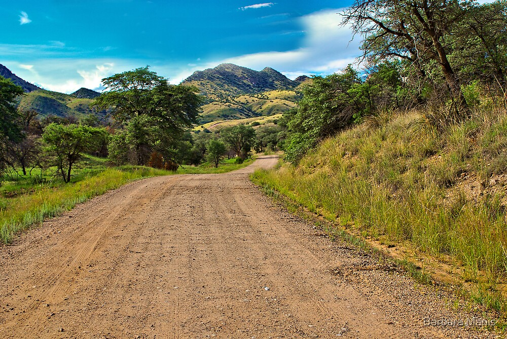Box Canyon Road by Barbara Manis