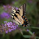 Swallowtail butterfly, butterfly, yellow butterfly, butterfly print by Brandy Watkins