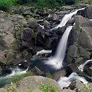 Mclaren falls, Tauranga by Paul Mercer