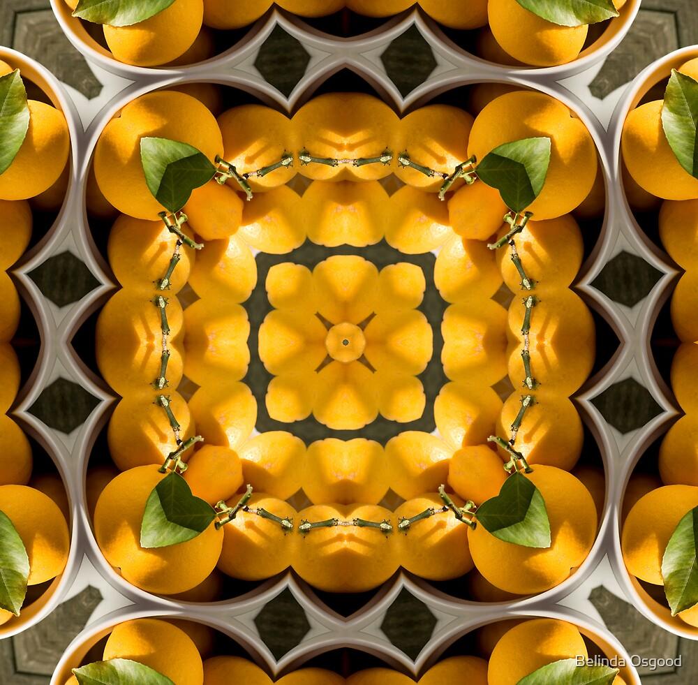 Citrus overload by Belinda Osgood