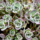 Tiny Succulents by justminting