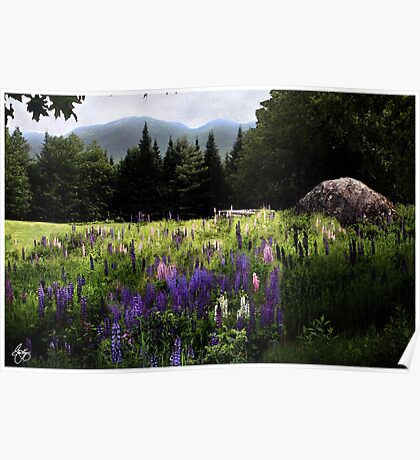 Lupine in the Shadow of Cannon Poster