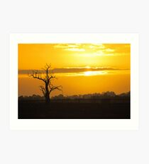 Farm Tree At Sunset  Art Print