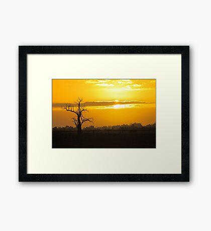 Farm Tree At Sunset  Framed Print