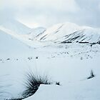 Lindis Pass, South Island, New Zealand by McCall-Images
