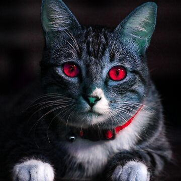 Red Eyed Cat by nikitasdesigns