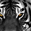 Tiger Eyes I by Jon  Johnson