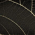 Patterns of Nature - Leaf Veins in Gold on Black Canvas No. 1 by Serge Averbukh
